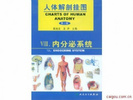 人體解剖學彩色掛圖