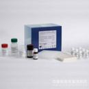 人单链DNA(ssDNA)酶联免疫试剂盒
