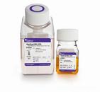 亚硫酸铋琼脂(BS)