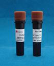 胶原酶Ⅱ CAS#:9001-12-1