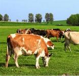 NSW牛流行熱(BEF)病毒抗體ELISA試劑盒 科研試劑