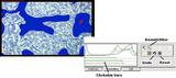 骨形态测量仪