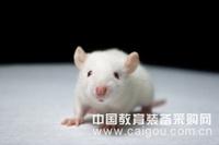 PEG细胞融合剂