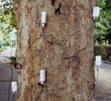 二维/三维脉冲树木探测仪