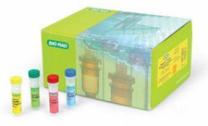 小鼠诱导型一氧化氮合成酶(iNOS)ELISA试剂盒