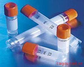 衔接因子蛋白含pH域磷酸酪氨酸结合域和亮氨酸拉链基元1(APPL)抗体