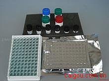 人肺癌标志物ELISA试剂盒
