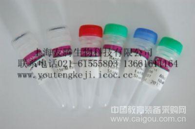 人胰脂肪酶(PL)ELISA Kit