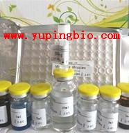 人肾母细胞过度表达基因(NOV/CCN3)ELISA试剂盒