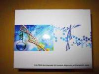 猪ELISA试剂盒,猪基质金属蛋白酶9(MMP-9)ELISA试剂盒