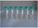 进口标准品头孢克肟杂质C