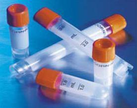 GROβ抗体,生长调节致癌基因β/黑素瘤生长刺激因子 抗体