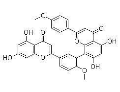现货 Isoginkgetin/异银杏双黄酮 mRNA抑制剂