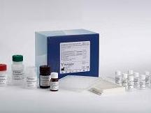 人凝血因子ⅩⅢ(FⅩⅢ)ELISA试剂盒