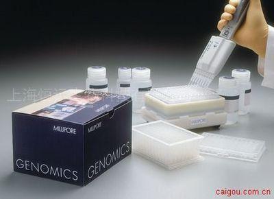 人白细胞弹性蛋白酶ELISA试剂盒