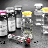 猫促黄体生成激素(LH)ELISA试剂盒