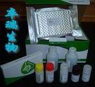小鼠热休克蛋白70(HSP-70)Elisa试剂盒