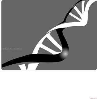 细胞周期 MTT Hochest33258 PI DAPI