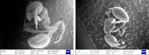 OPTON的微观世界第9期 蚂蚁的世界