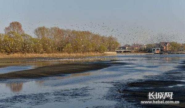 """北戴河湿地公园成为""""自然教育学校(基地)"""""""