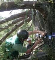 PiCUS-3 Sonic Tomograph弹性波树木断层画像诊断装置