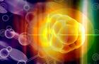 """干细胞领域为何""""假""""报频传?"""