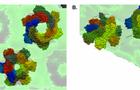 日本RIBM超高速視頻級原子力顯微鏡HS-AFM實現膜蛋白的直接實時成像