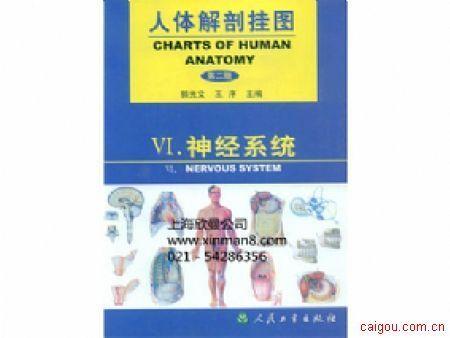 人體解剖掛圖、神經系統掛圖