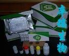 人CCAAT增强子结合蛋白δ(C/EBPδ)Elisa试剂盒