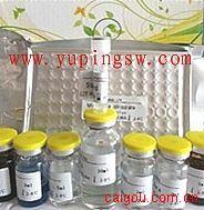 人胶原酶Ⅲ(Collagenase Ⅲ)ELISA试剂盒