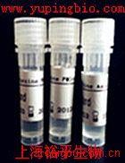 增殖细胞核抗原抗体