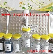 犬免疫球蛋白M(IgM)ELISA试剂盒