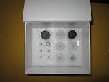 胸腺五肽ELISA试剂盒厂家代测,进口人(TP-5)ELISA Kit说明书