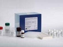 兔血管紧张素Ⅱ(ANG-Ⅱ)ELISA试剂盒