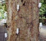 二維/三維脈沖樹木探測儀