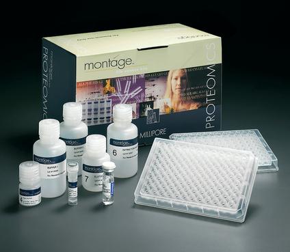 大鼠孕酮(PROG)ELISA Kit